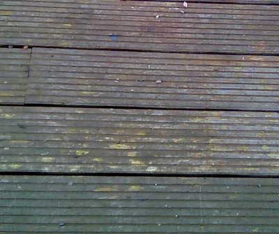 Slime covered deck